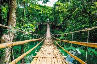 ジャングルの吊り橋 ポスター