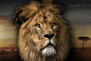 ライオン ポスター
