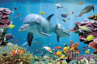 熱帯の海 ポスター