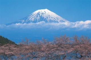 富士山/桜 ポスター