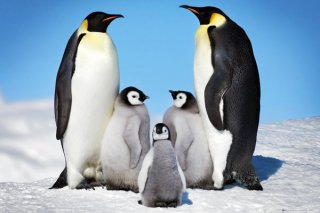 ペンギンの家族 ポスター