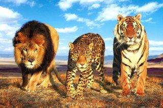 野生の猫達 ポスター