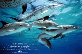 イルカ 「人類の友達」 ポスター
