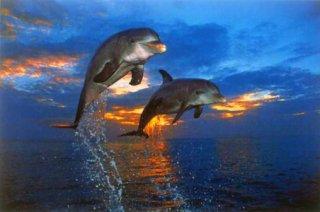 イルカの競争 ポスター