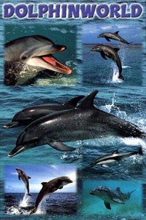 イルカの世界 ポスター