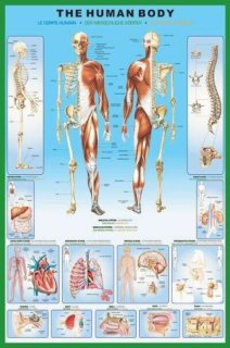 人体図 ポスター