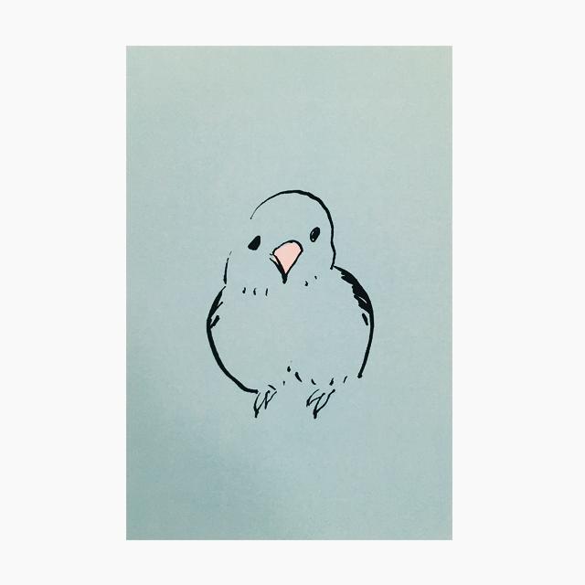 IROTORIDORI ポストカード(マメルリハ)