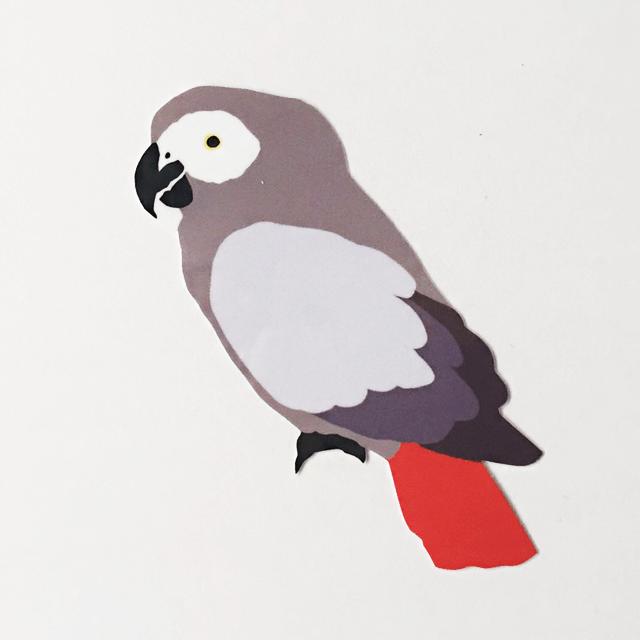 鳥デザインステッカー(ヨウム)