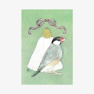 文鳥院まめぞう ポストカード(Quaret Bun �)